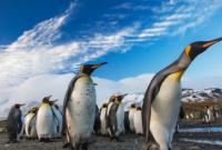 如何坐着邮轮去南极?